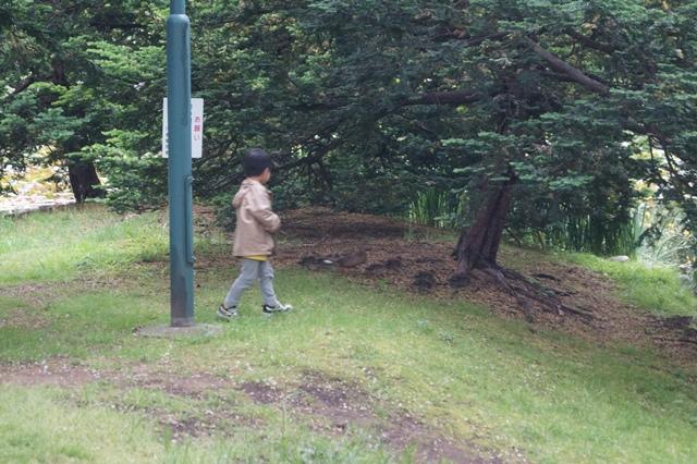 藤田八束の北海道の旅: カルガモの赤ちゃんに逢いました、北海道道庁池のカルガモの家族に癒されました_d0181492_11402338.jpg