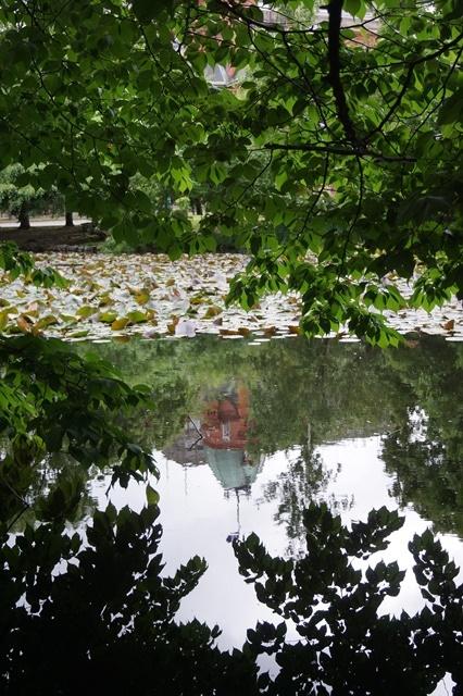 藤田八束の北海道の旅: カルガモの赤ちゃんに逢いました、北海道道庁池のカルガモの家族に癒されました_d0181492_11434244.jpg