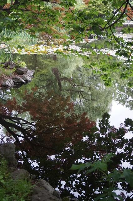 藤田八束の北海道の旅: カルガモの赤ちゃんに逢いました、北海道道庁池のカルガモの家族に癒されました_d0181492_1144621.jpg