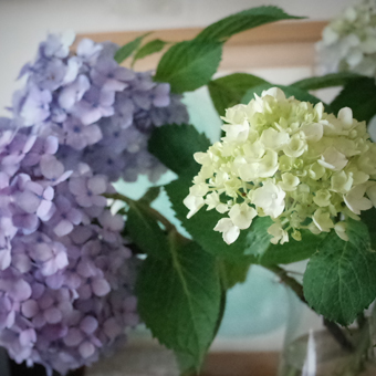紫陽花の色_c0200002_1964780.jpg