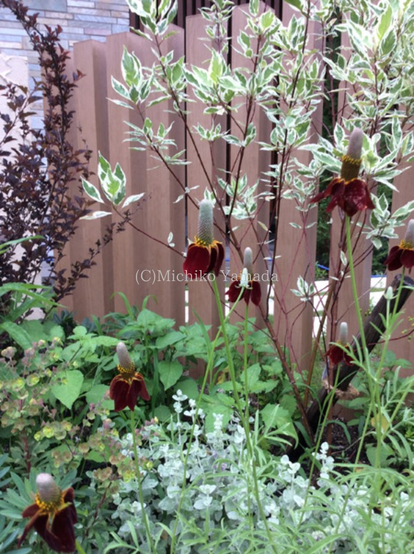 宿根草と低木の花壇植栽_a0139105_20442729.jpg
