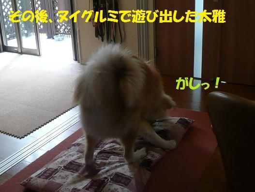 f0121712_7301218.jpg