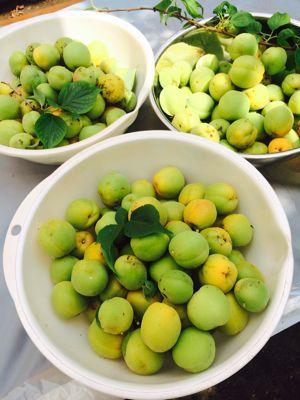 梅収穫☆_a0153945_1722934.jpg