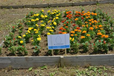「母の日キャンペーン」の御支援で、被災地に花壇を作りました。_e0105047_1612141.jpg