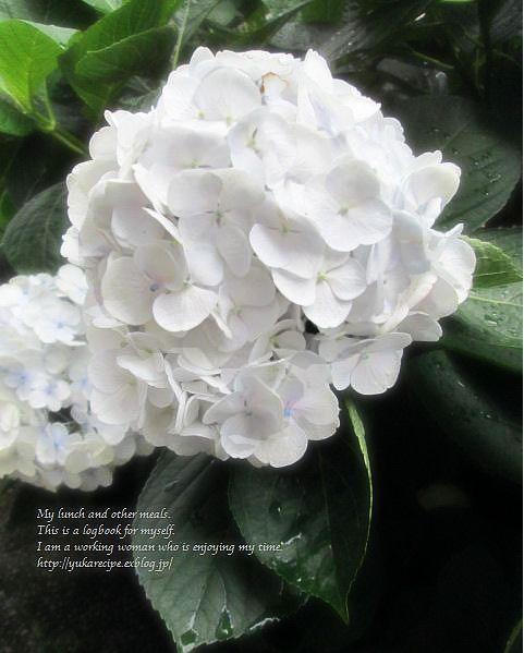 6.19 紫陽花弁当と雨の花_e0274872_22455599.jpg