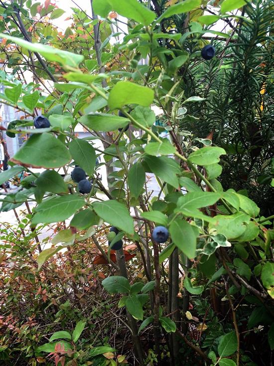 Bay Sideの植物たち2_d0172279_17474442.jpg
