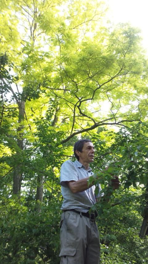 今年は、梅が豊作です_f0213189_16591642.jpg