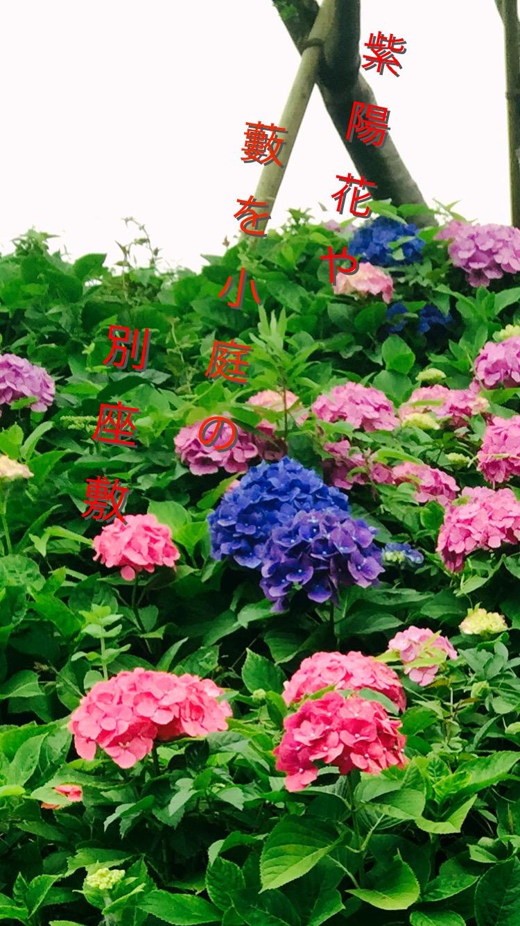 あ ぢ さ ゐ  紫陽花【a hydrangea】 _a0135191_15575767.jpg