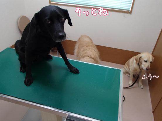 動物病院へ_f0064906_16104551.jpg