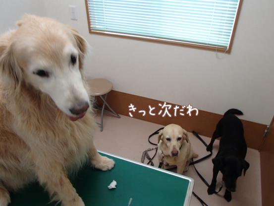 動物病院へ_f0064906_1665649.jpg