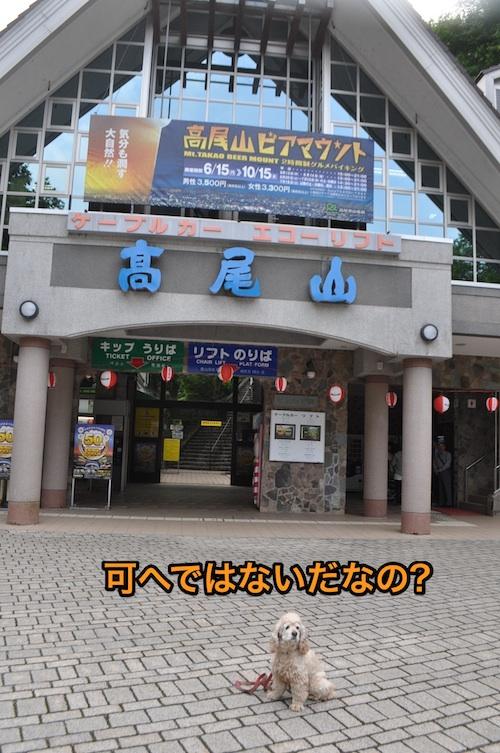 高尾山を攻略する_b0067012_125368.jpg