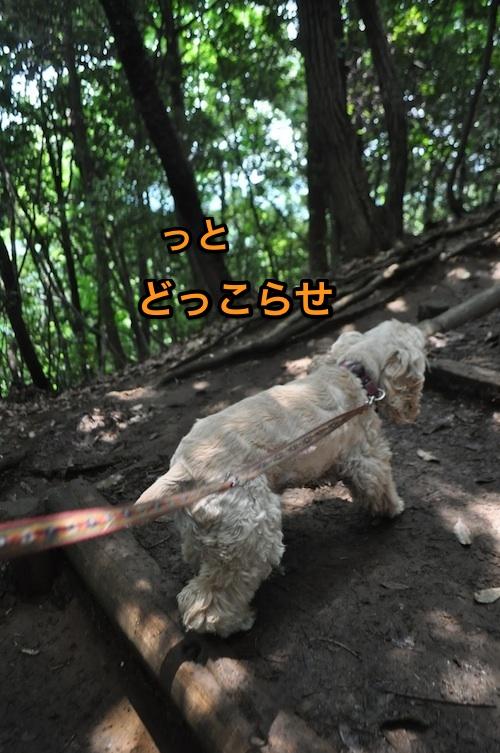 高尾山を攻略する_b0067012_1481075.jpg