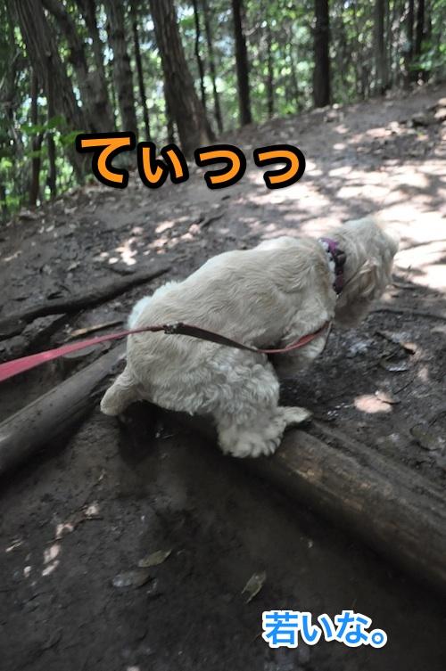 高尾山を攻略する_b0067012_1482821.jpg