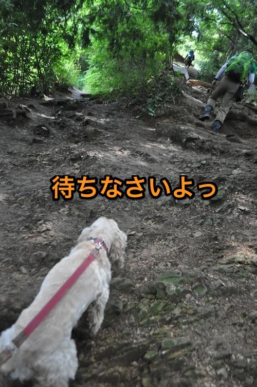 高尾山を攻略する_b0067012_1534630.jpg