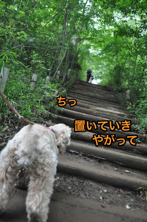 高尾山を攻略する_b0067012_2153343.jpg