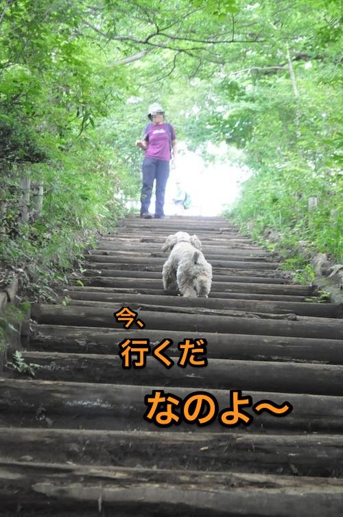 高尾山を攻略する_b0067012_2181954.jpg
