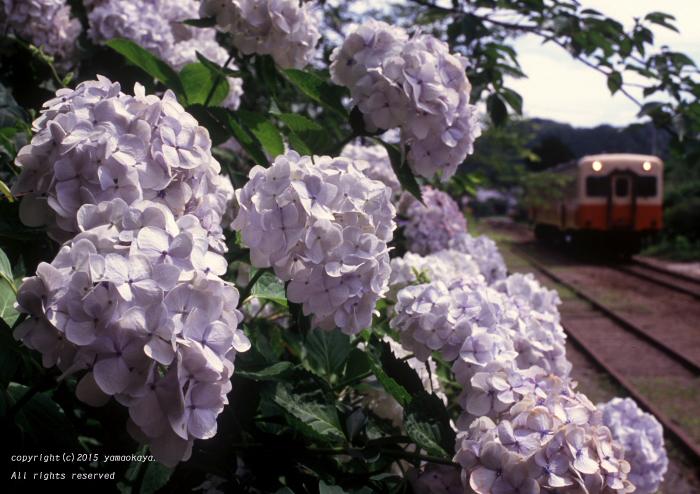 白紫陽花の駅で_d0309612_1131745.jpg