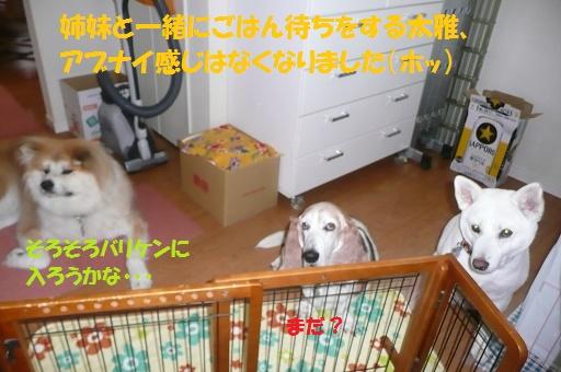 f0121712_1473943.jpg