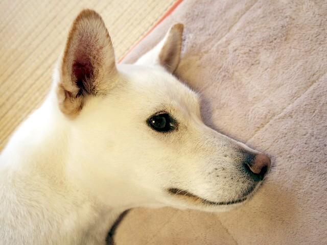 別犬28号_b0090517_21505207.jpg
