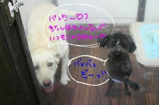 b0130018_00581038.jpg
