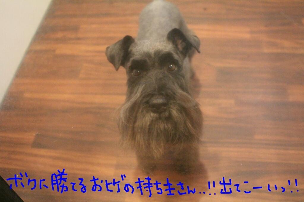 b0130018_10500618.jpg