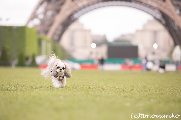 イヌ連れパリ旅行&記念撮影 クララちゃん編_c0024345_18515718.jpg