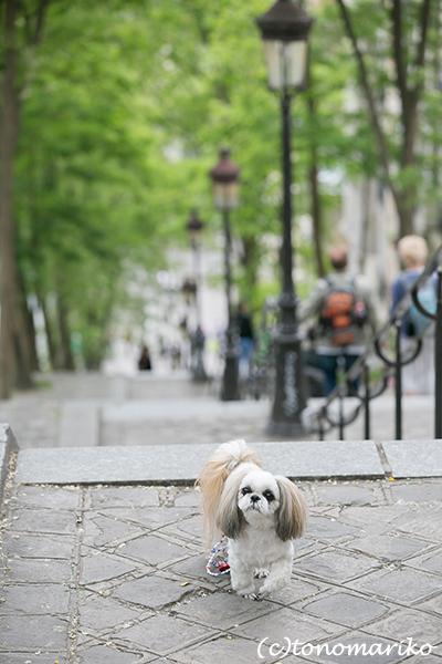 イヌ連れパリ旅行&記念撮影 クララちゃん編_c0024345_18515744.jpg