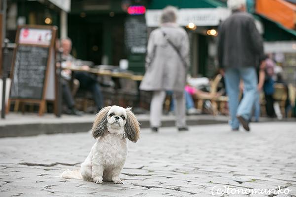 イヌ連れパリ旅行&記念撮影 クララちゃん編_c0024345_18515766.jpg