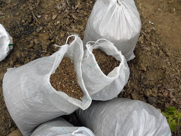 ネギ苗植え付けたが多数に根腐れ発生、収穫に不安6・17_c0014967_1922892.jpg