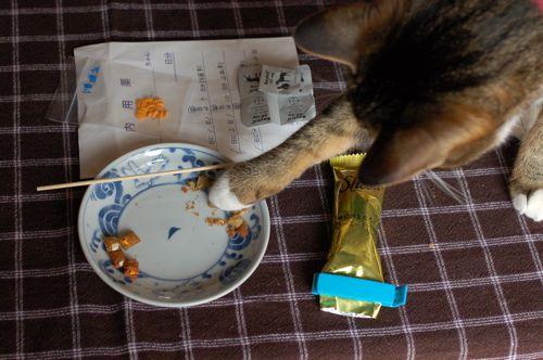 猫に投薬_c0185674_2132986.jpg