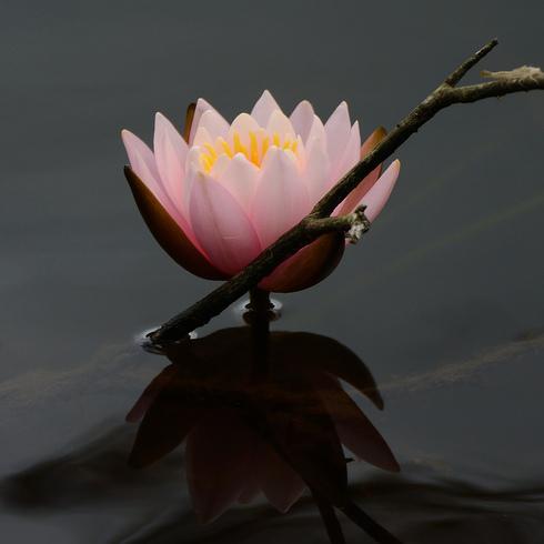 蛇の池の睡蓮_f0099102_16392639.jpg
