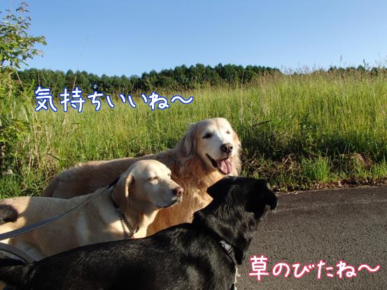 やっと青空_f0064906_16262379.jpg