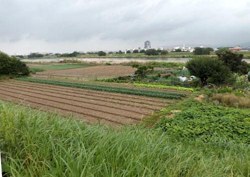 桂川河川敷ウウォーキング_e0048413_2038176.jpg