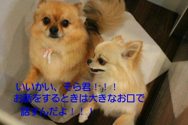 b0130018_20081424.jpg