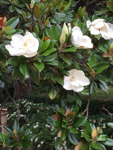 植物園の紫陽花_c0223630_22593965.jpg