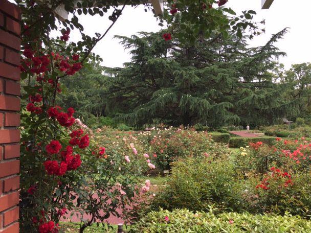 植物園の紫陽花_c0223630_22594069.jpg