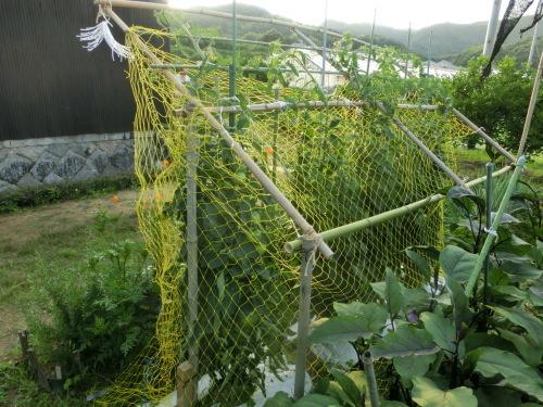 お大師講を終えて 網の中のトマトを見た_e0291149_18415510.jpg
