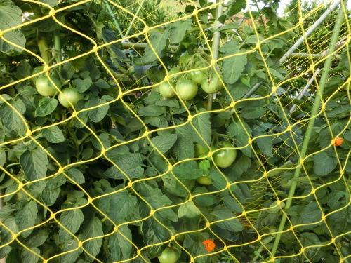 お大師講を終えて 網の中のトマトを見た_e0291149_18421340.jpg