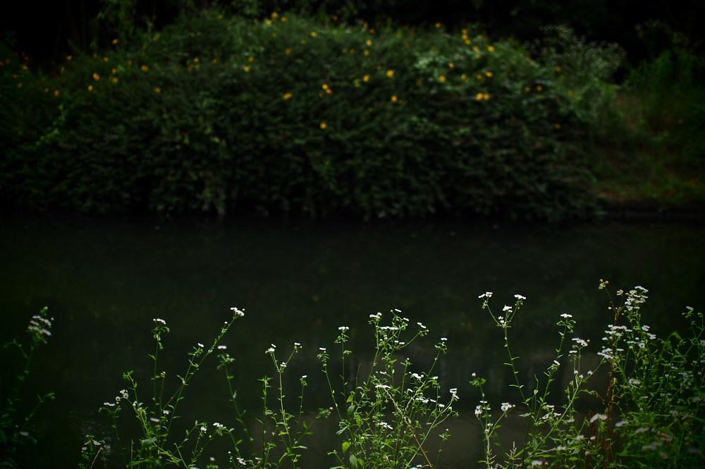 紫陽花 2015 <中書島界隈>                     _f0021869_2084855.jpg