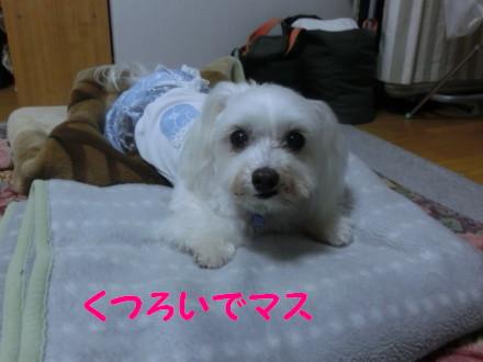 b0193480_20142556.jpg