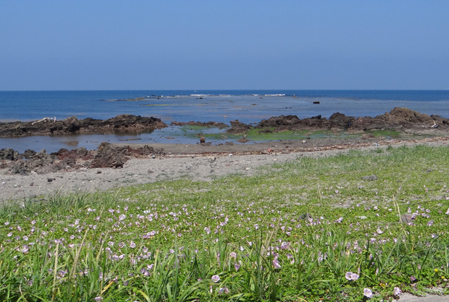 初夏の西海岸ドライブ。海と蕎麦畑の景色など~♪_a0136293_1548372.jpg