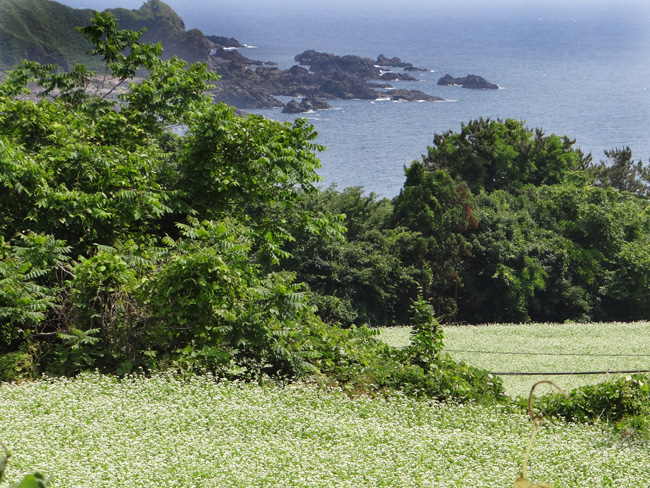 初夏の西海岸ドライブ。海と蕎麦畑の景色など~♪_a0136293_16225567.jpg