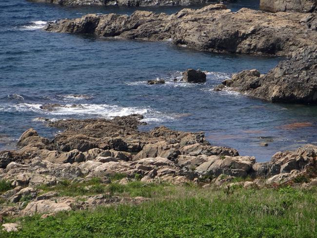 初夏の西海岸ドライブ。海と蕎麦畑の景色など~♪_a0136293_1628207.jpg