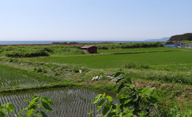 初夏の西海岸ドライブ。海と蕎麦畑の景色など~♪_a0136293_16314726.jpg