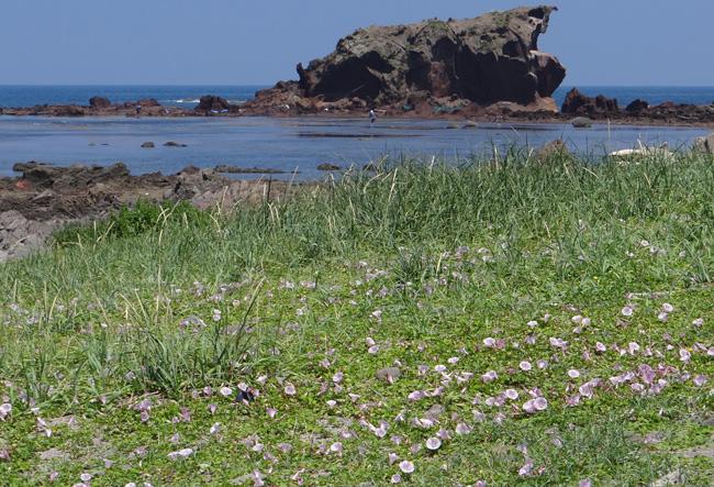 初夏の西海岸ドライブ。海と蕎麦畑の景色など~♪_a0136293_16561964.jpg