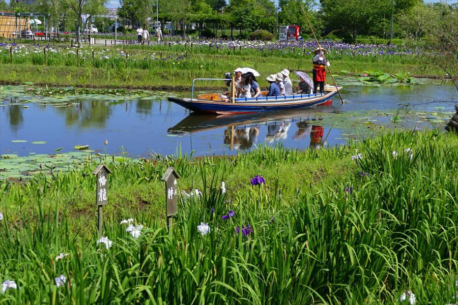 千葉県香取市佐原 「水生植物園」(1)_d0106628_15490852.jpg