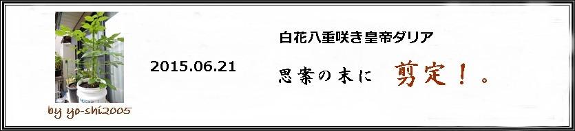 e0033229_1812237.jpg