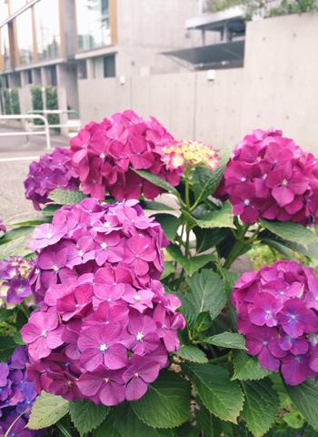 6/21 雑司ヶ谷手創り市 雨天中止です_d0156336_683270.jpg