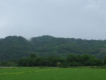 緑色の季節_a0014840_16394956.jpg