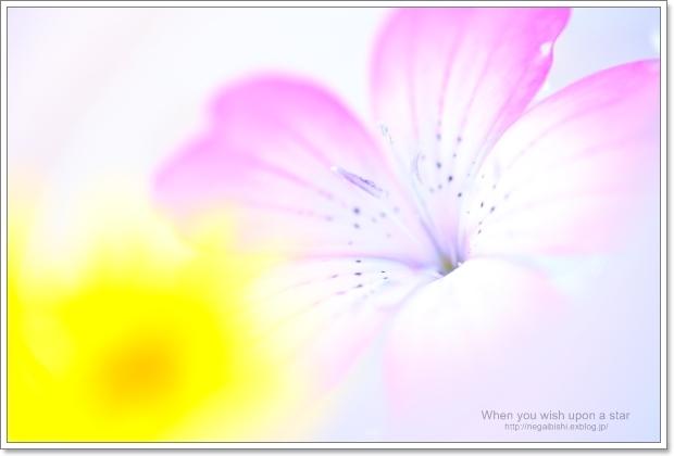 b0233456_20115649.jpg